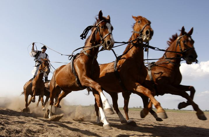 A traditional Hungarian horseman steers five horses in a horse show on the Great Hungarian Plains, or Puszta, in Bugac