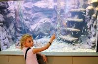 akvarium-bfured